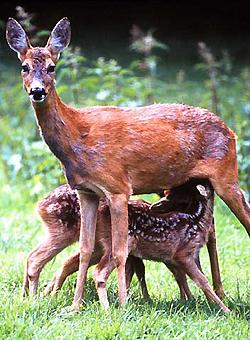 Erlebnisführung mit Fütterung der Wildtiere