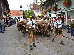 Viehscheid in Kranzegg