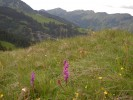 Geniesen Sie im Sommer die bunten Almwiesen oder die Almrosenbl�te  in den Bergen und atmen Sie die frische Bergluft ein.