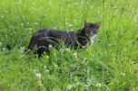 """Zuwachs auf dem Theresienhof. Seit ein paar Tagen besucht uns diese Katze, die Gästekinder haben sie """"Wolf"""" getauft"""